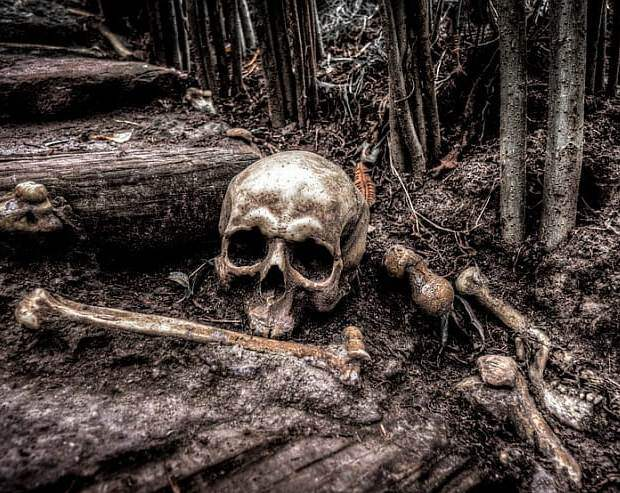 10 смертельных опасностей, подстерегающих в наших лесах