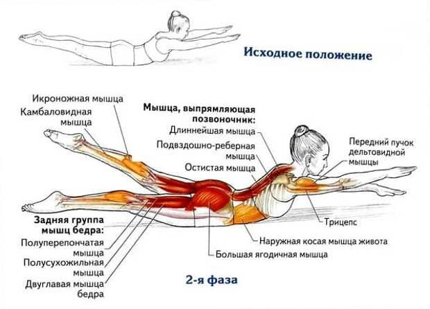 8 упражнений для укрепления спины, здоровье, упражнения для спины, Омолаживающие упражнения