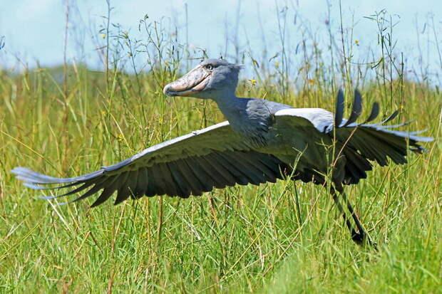 «Хорошо, что крокодилы не летают» — реальные крылатые существа, с которыми лучше не встречаться