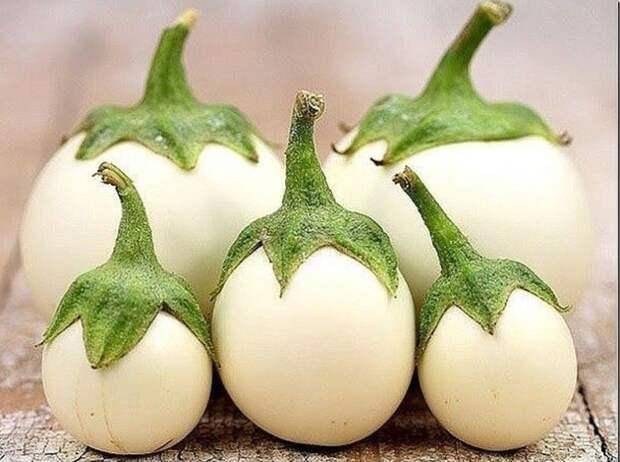 Яйцо на ветке: баклажан сорта eggplant
