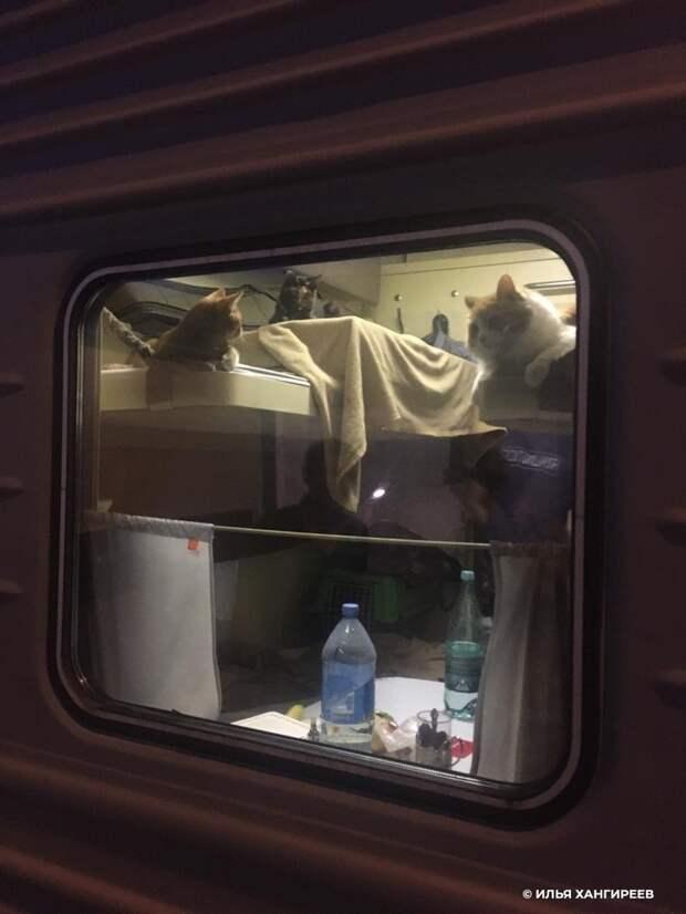 Пассажир поезда до Анапы выкупил для своих котов все купе
