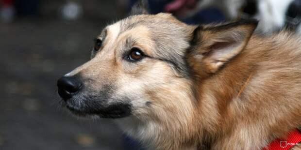 Жительницы Строгина организовали фонд помощи животным