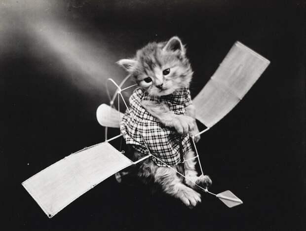 Очаровательные винтажные кошки, которые докажут, что коты правили миром во все времена кошки, прекрасное, фотографии