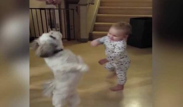 Этот песик закружился в танце, посмотри, что сделал малыш