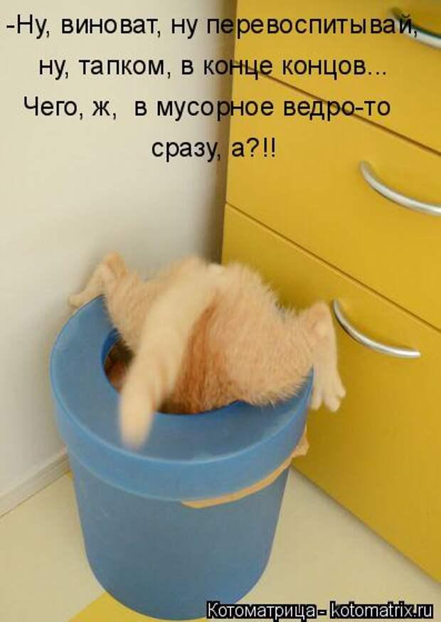 Котоматрица: -Ну, виноват, ну перевоспитывай, ну, тапком, в конце концов... Чего, ж, в мусорное ведро-то сразу, а?!!