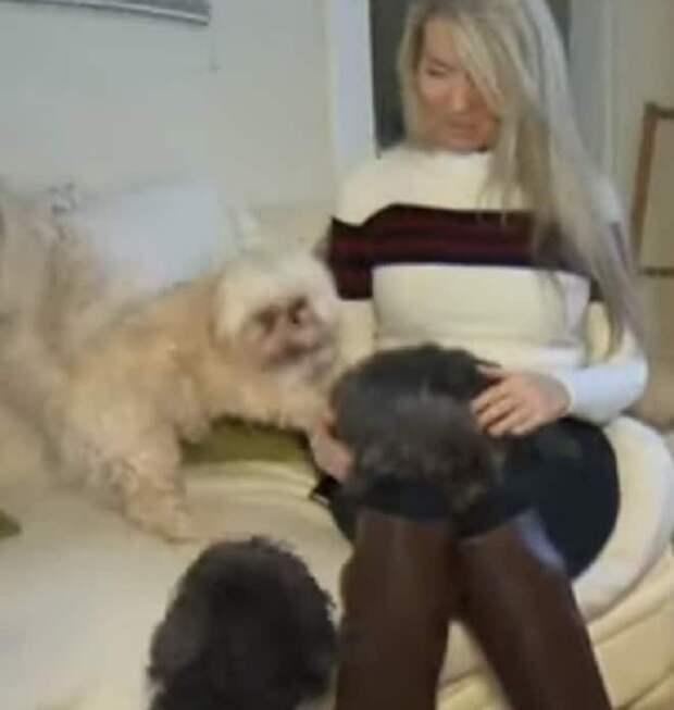 Три собаки и женщина