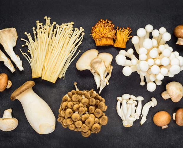 Самые полезные грибы для иммунитета