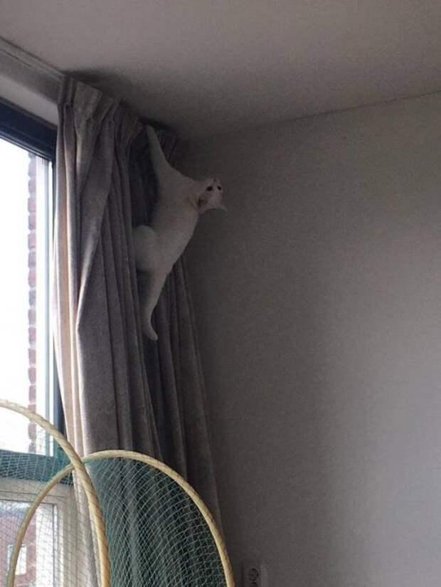 Кот на шторе