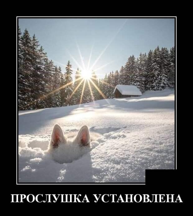 Свежие и смешные демотиваторы для классного настроения (10 фото)