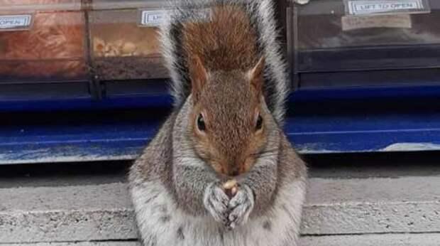 Белка счастлива, а орешки целы! Продавец еды был атакован зверьками, поэтому пришлось «договариваться»