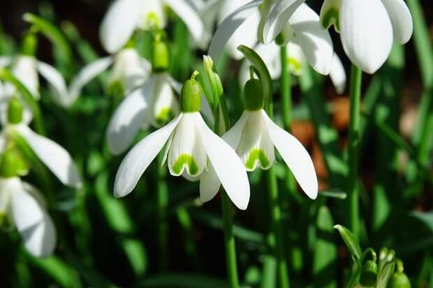 В заказнике «Долгие пруды» горожан познакомят с первоцветами