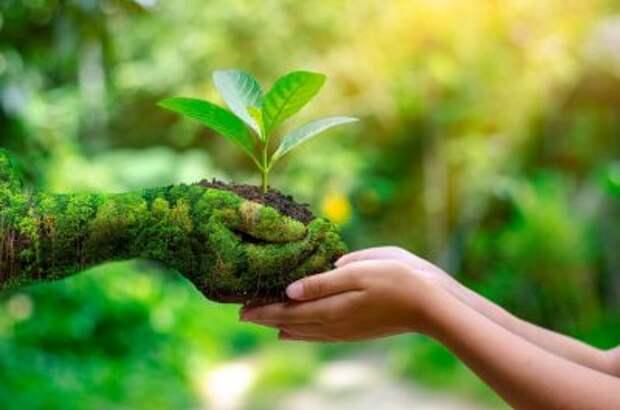 Почем зелень? Экологическая повестка как мост для диалога России с Западом
