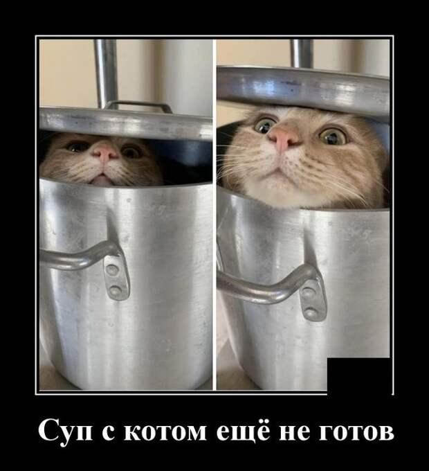 Демотиватор про суп с котом