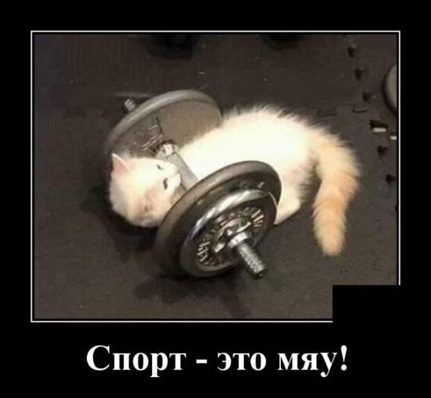 Демотиватор про фитнес