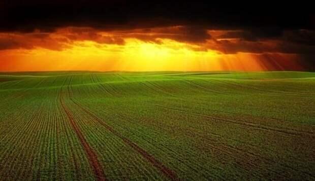 Немецкие СМИ: сельскохозяйственный трюк России превзошел ожидания США