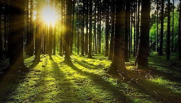 Солнечная погода ожидается в Подольске в среду