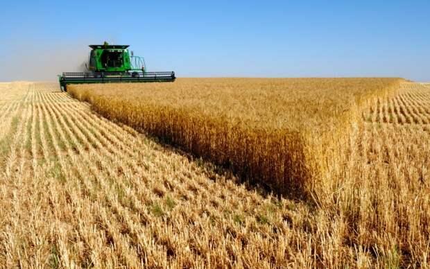 Ни одна страна не сможет отнять у России статус лидера в экспорте пшеницы