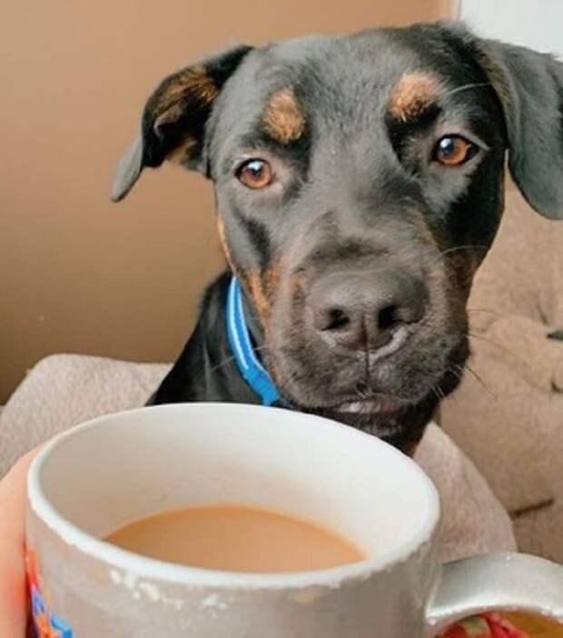 Собака и чай