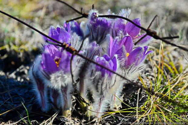 А на нейтральной полосе цветы необычайной красоты!
