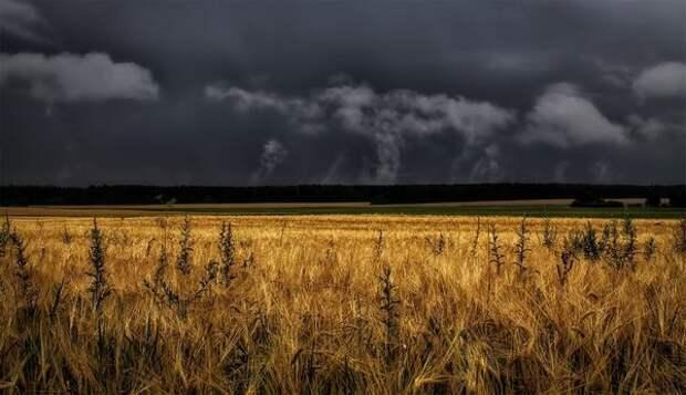 Дождь, хмуро моросящий над полями... Чон Чхоль (1537 - 1594)