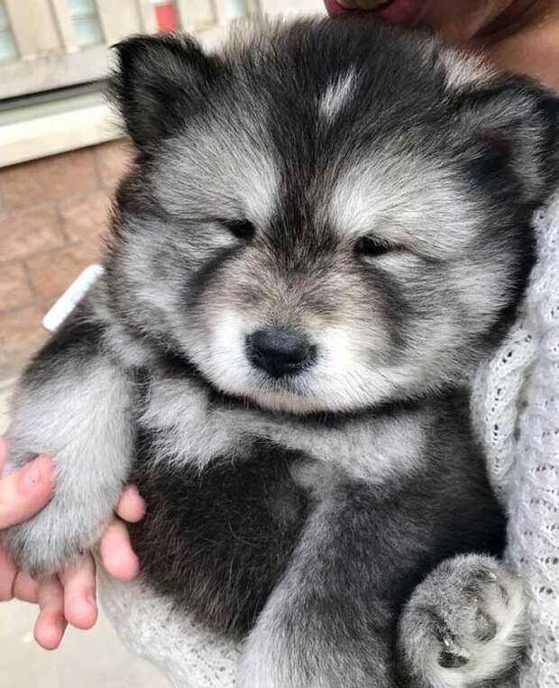 15 щеночков, которые украдут ваше сердце, чтобы наполнить его светом и любовью