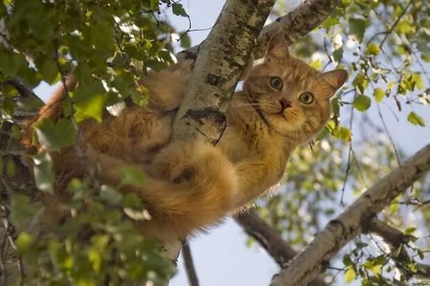 Как вся деревня снимала кота с березы