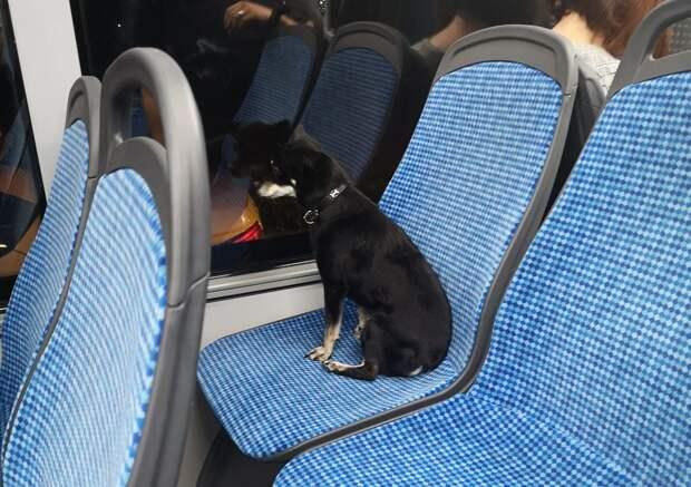 Пёс из Выхина-Жулебина отправился в автобусный тур по округу