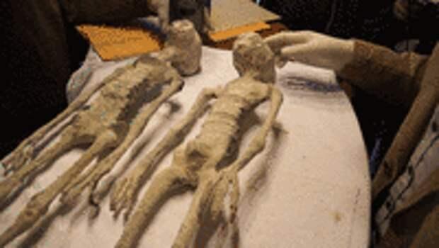 Целых 5 мумий «пришельцев» из Перу. Экспертиза АНТРОПОГЕНЕЗ.РУ
