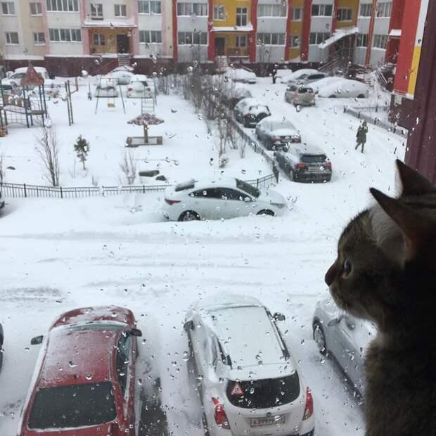 Северные регионы России завалило снегом
