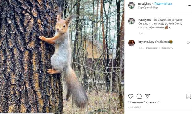 Улыбчивая белка из Серебряного Бора восхитила соцсети