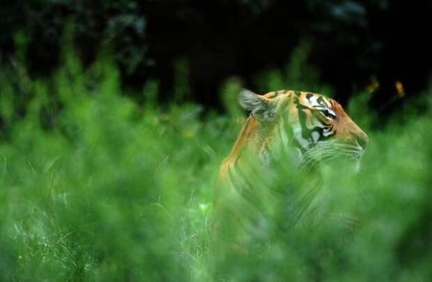 Фотоподборка красивых фото с животными