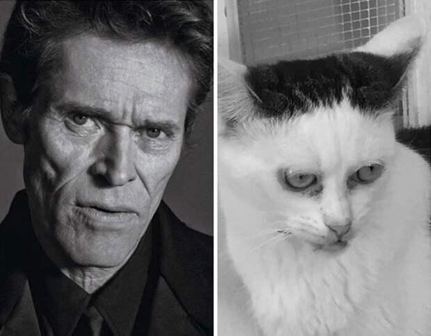 Ведь Марла далеко не красавица. Зато какая талантливая! Она ведь не только Стива Бушеми изображает, но и других известных актеров Стив Бушеми, забавно, забавное сходство, кошка, напоминает, необычная внешность, необычная морда, сходство