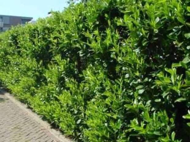 Для того чтобы результат был хорошим, нужно подбирать такие растения, которые подходят вашей почве и климатическим условиям.