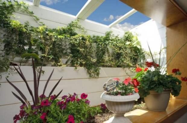 Органическое земледелие, пермакультура: теплица в подвале