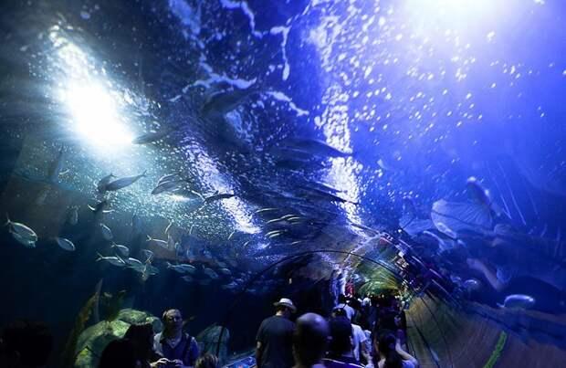 Километры воды: фантастический океанариум в испанской Валенсии