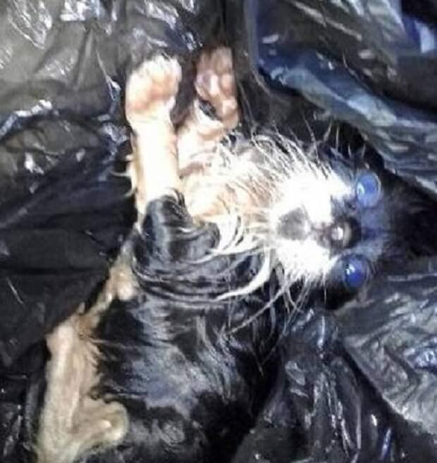 Брошенный в грязном мешке, трёхнедельный котёнок истошно плакал и звал на помощь