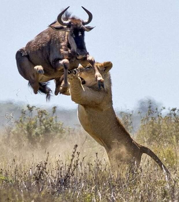 Хочешь жить, умей...летать животные, красота, полет, природа, прыжок, удживительное