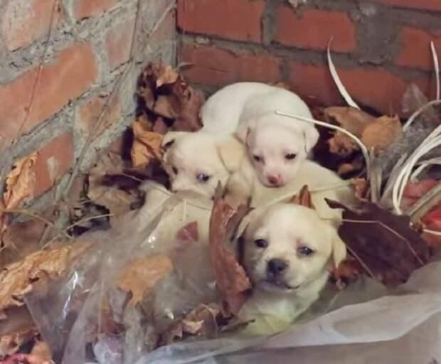 Три крохотных щенка ждали маму на заброшенной фабрике. А собаку увезли на ферму