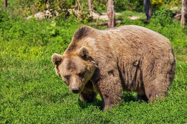 Подросток погиб при нападении медведя в нацпарке в Красноярском крае