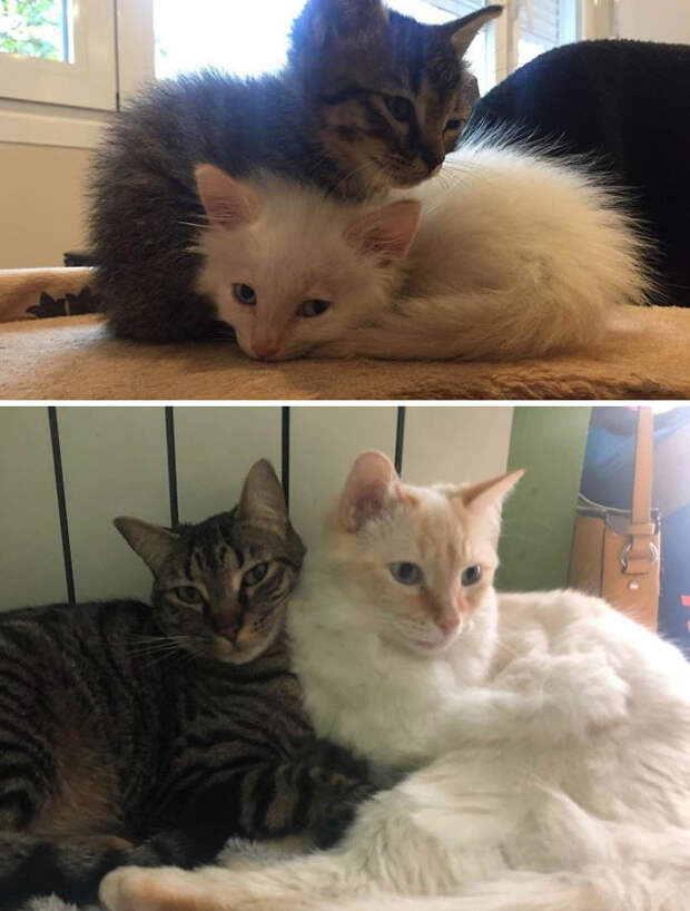 30 фото о том, как выглядели бездомные коты до и после «одомашнивания»