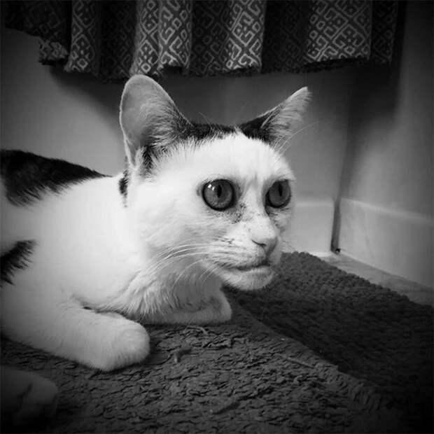 Да и сотрудники приюта шутили на эту тему. Говорили, что эта кошка у них - мем ходячий Стив Бушеми, забавно, забавное сходство, кошка, напоминает, необычная внешность, необычная морда, сходство