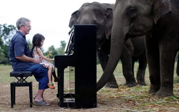 Пианист 20 лет играет музыку для больных и слепых слонов, чтобы облегчить им боль