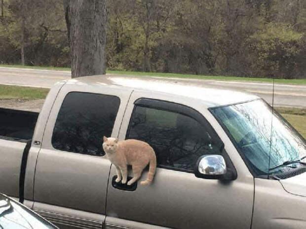 8 фото котиков, которые очутились в неожиданных местах просто потому, что могут