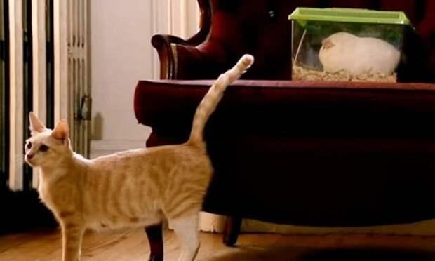 Кошка стоит
