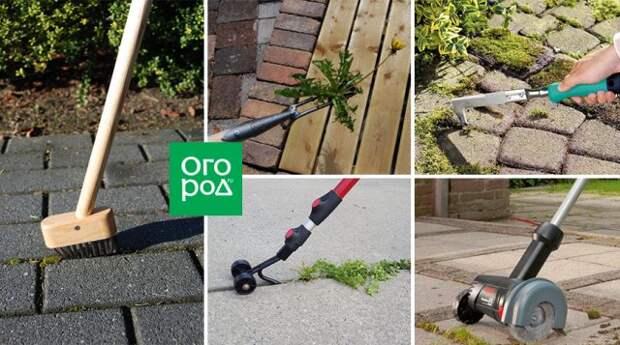 Сорняки и мох в щелях между плитками дорожки: как избавиться