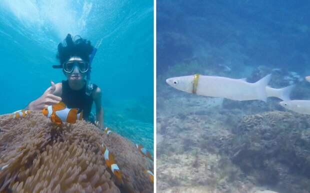 Девушка нашла под водой обручальное кольцо: его носила маленькая рыбка