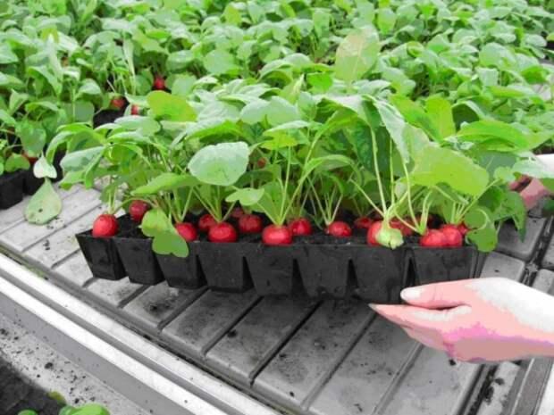 Органическая еда, натуральные продукты: Ферма на балконе!