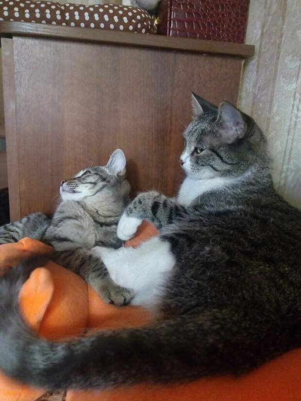 две кошки