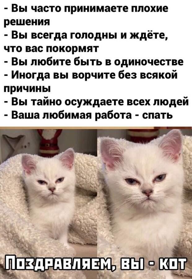 Поздравляем, вы - кот