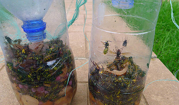 Эффективные ловушки для любых насекомых